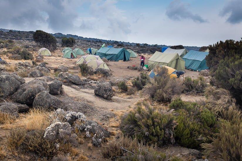 kilimanjaro_0386_pp