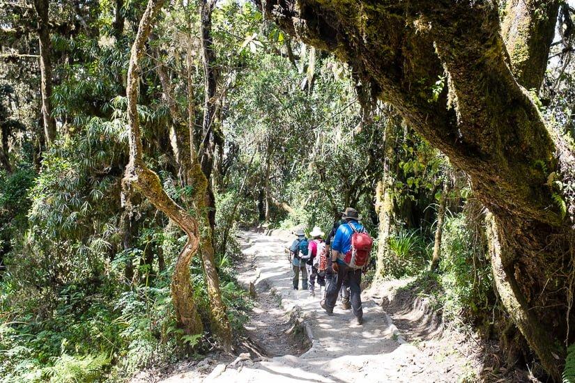 kilimanjaro_1034_pp