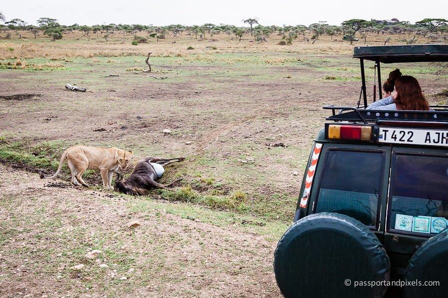 Lion with kill, Serengeti