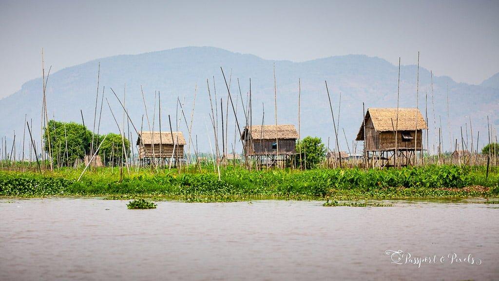 Floating vegetable gardens, Inle Lake, Myanmar