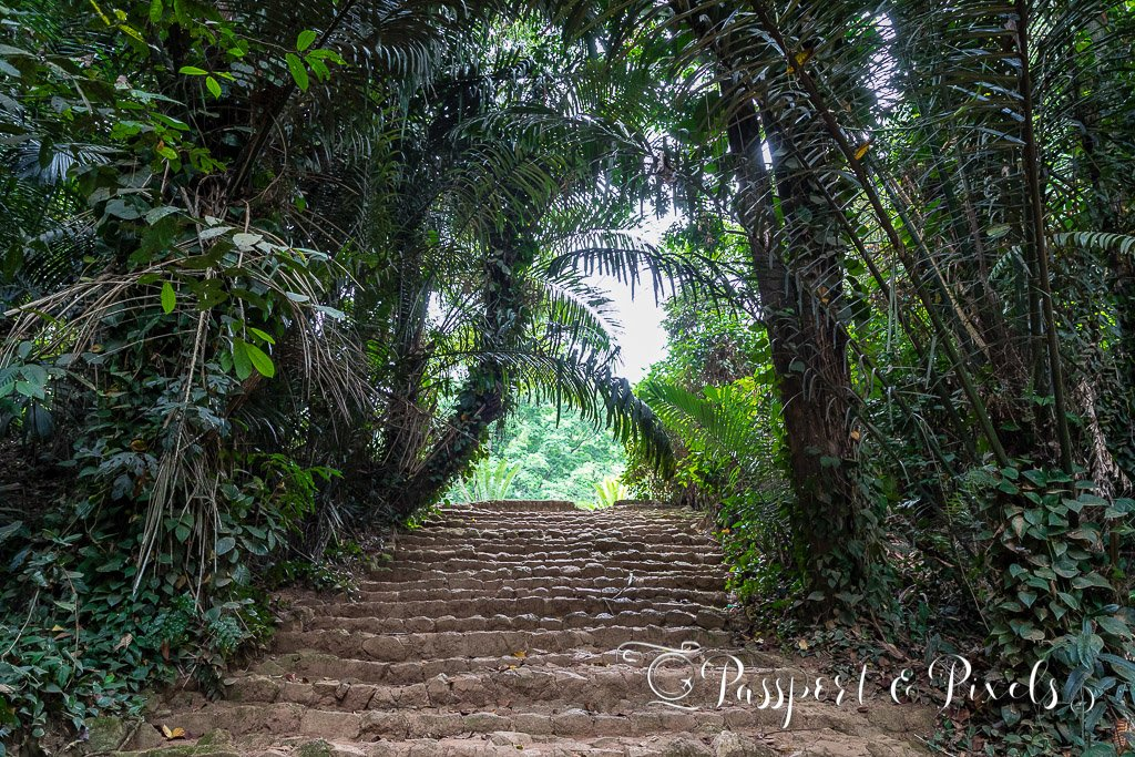 Things to see in Uganda - Entebbe Botanical Gardens