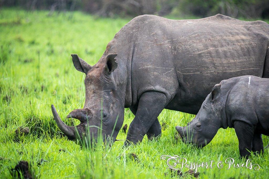 Things to do in Uganda - Ziwa Rhino Sanctuary