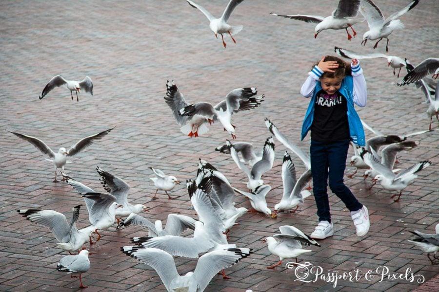 Seagulls, Sydney, Australia