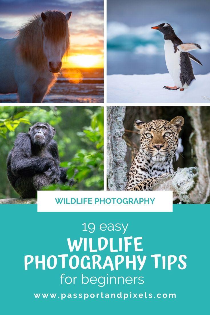Photographing Wildlife 19 Tips For Beginners Passport Pixels
