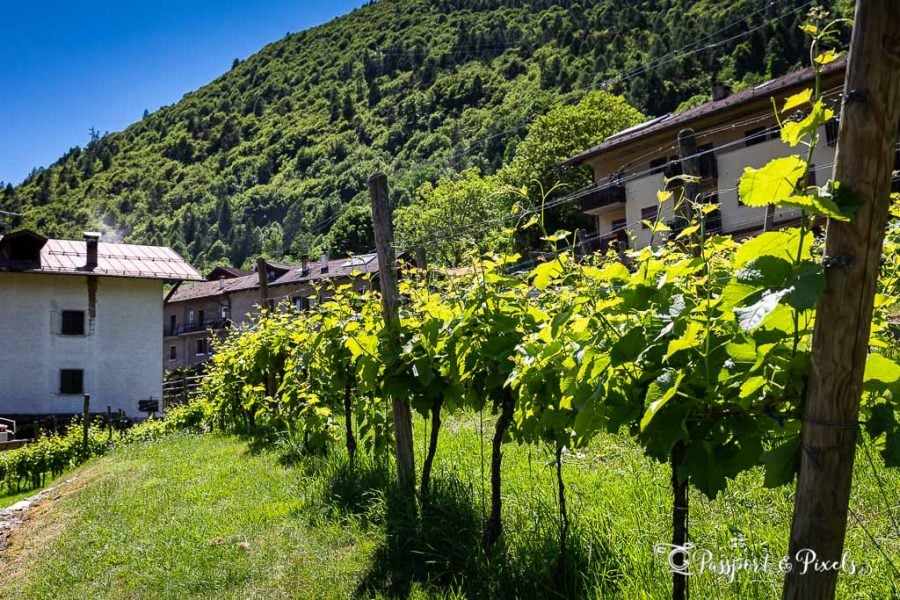Val Giudicarie vineyard