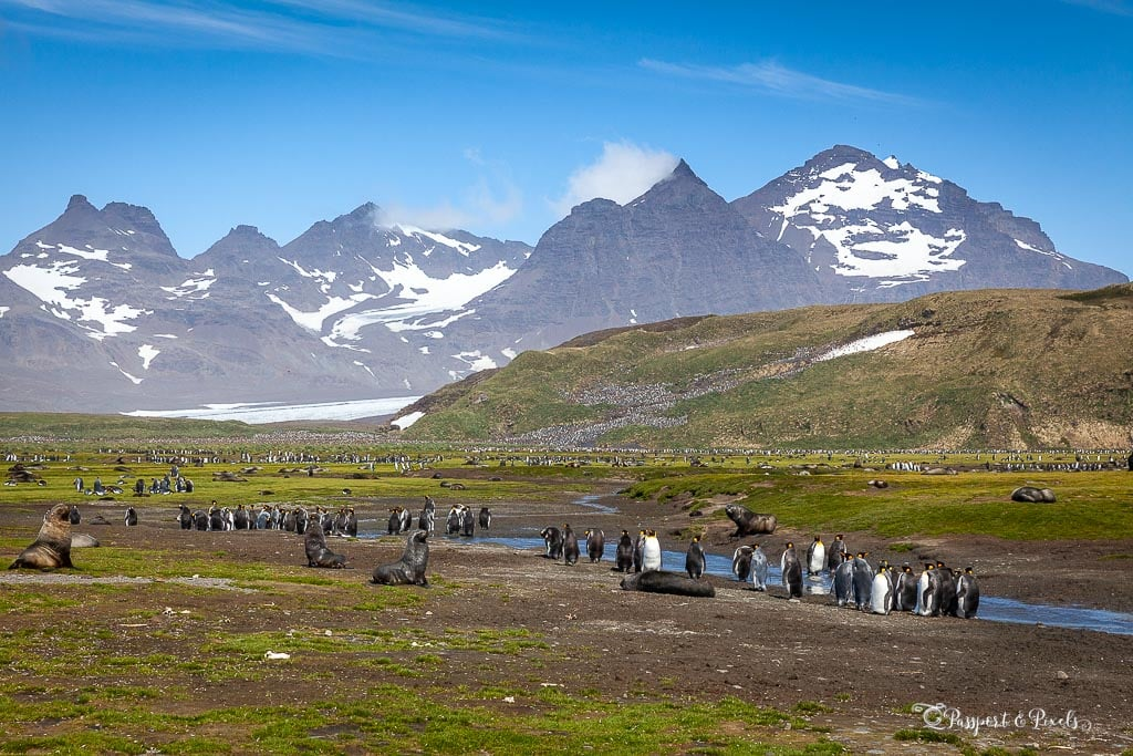 Antarctica itinerary: Salisbury Plain, South Georgia