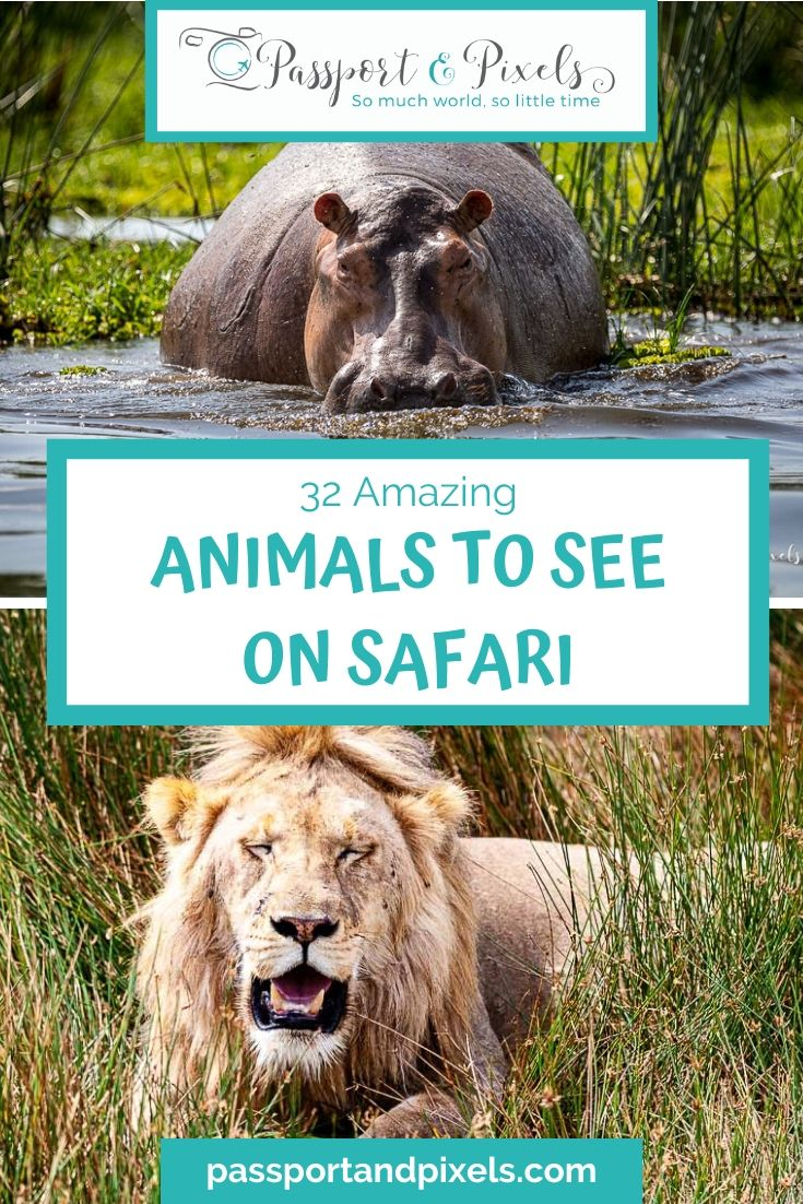 Top 32 Animals on Safari